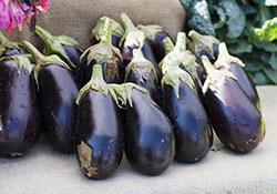 Eggplant at SFC Farmers Market