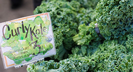 Kale at SFC Farmers Market