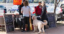Dog at Market Booth