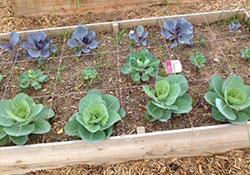 Gardening Classes