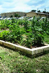 Summer School Garden