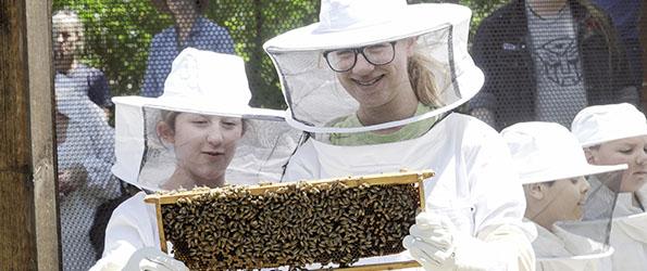 Bee Field Trip