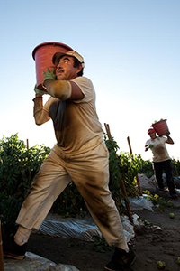 Farm Workers and Food Security
