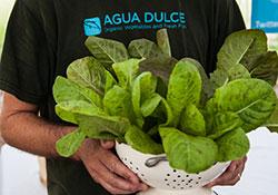 Agua Dulce Greens