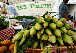 B5 Corn