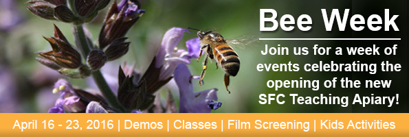 Join us for Bee Week!