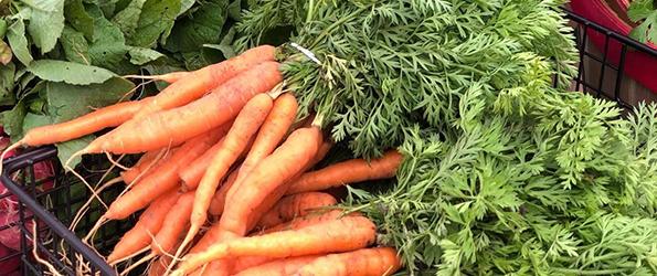 carrots 2021 NWSLTR.png