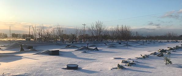 Flame Leaf Farm Snow