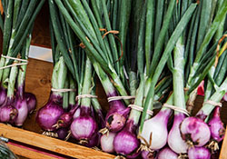 Farmers' Market Report