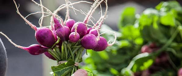 Valentine Treats at SFC Farmers' Markets
