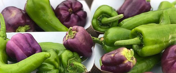 Purple and Green Peppers