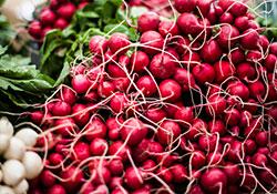 Farmers' Market Info