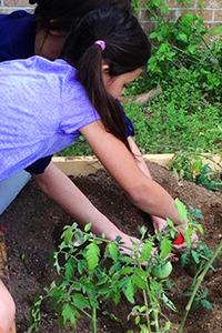 School Gardeners