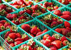 Farmer's Market Info